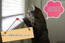 新宿区,新宿駅の携帯・スマホ PR・MC販促スタッフの短期アルバイト【WワークOK】の写真