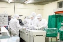 伊那市の食品製造スタッフの短期アルバイト【主婦・主夫歓迎】の写真